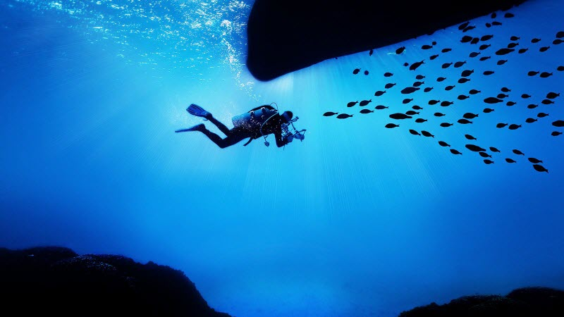 a diver encountering a group of fish in the deep blue sea