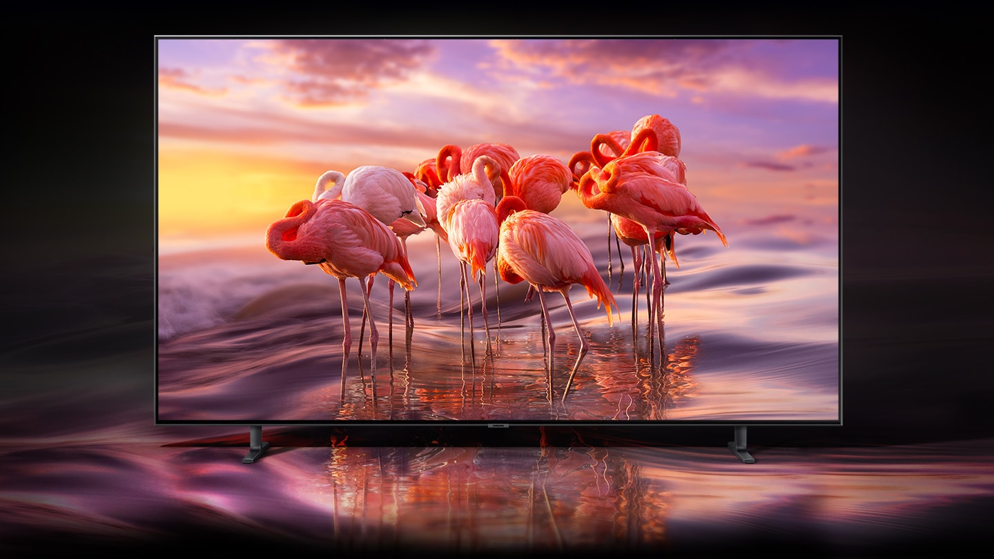 SAMSUNG Q80R Display Facing Forward Showing Flamingos in Water with a pink sky while the sun sets