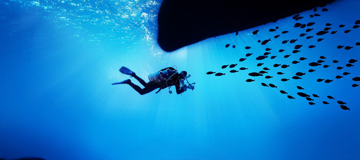 A snorkle diver is underwater swimming to a swarm of fishes which are all in their silhouettes