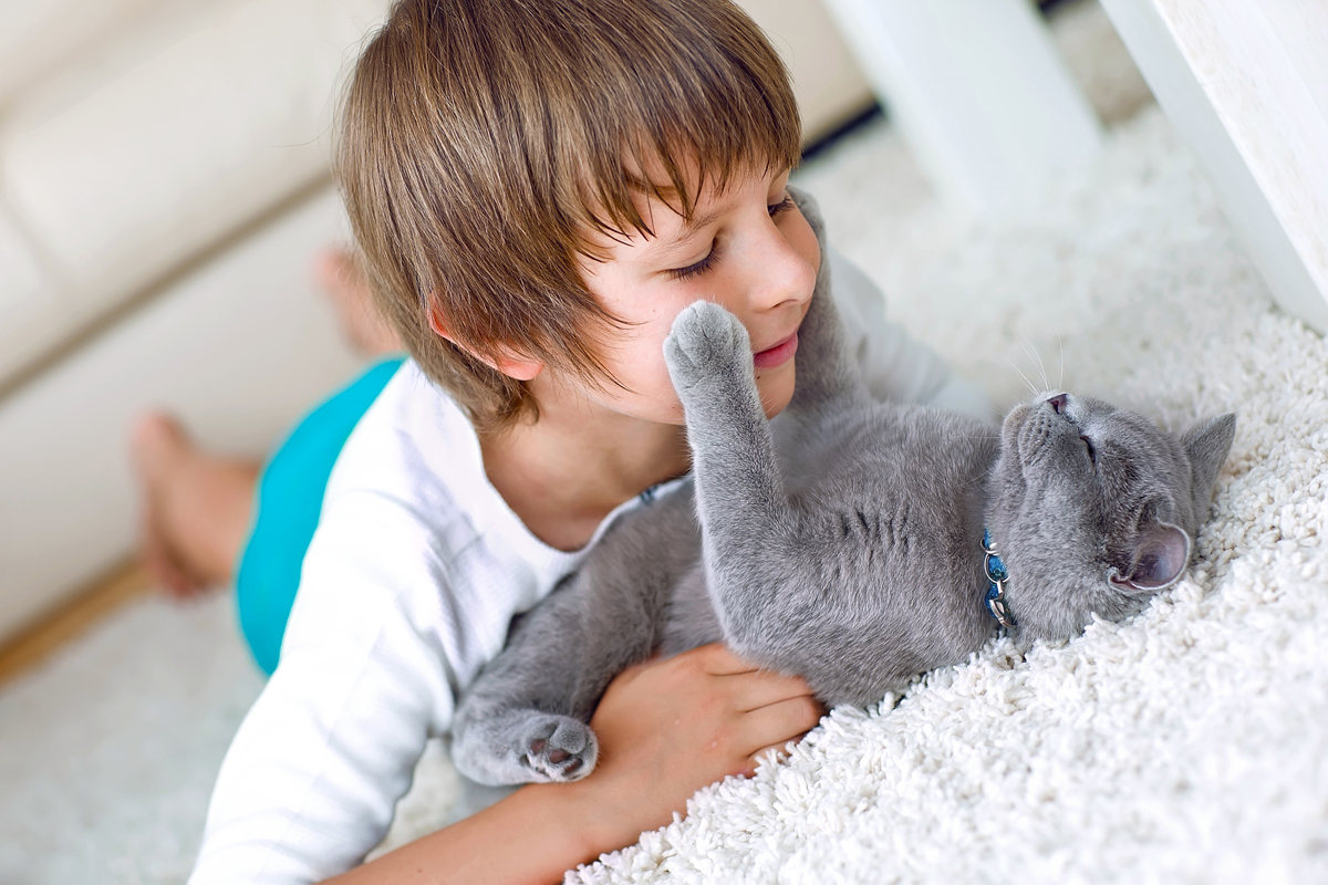 primary art for Adobe Photoshop Elements 2020 which shows a boy playing with a gray cat