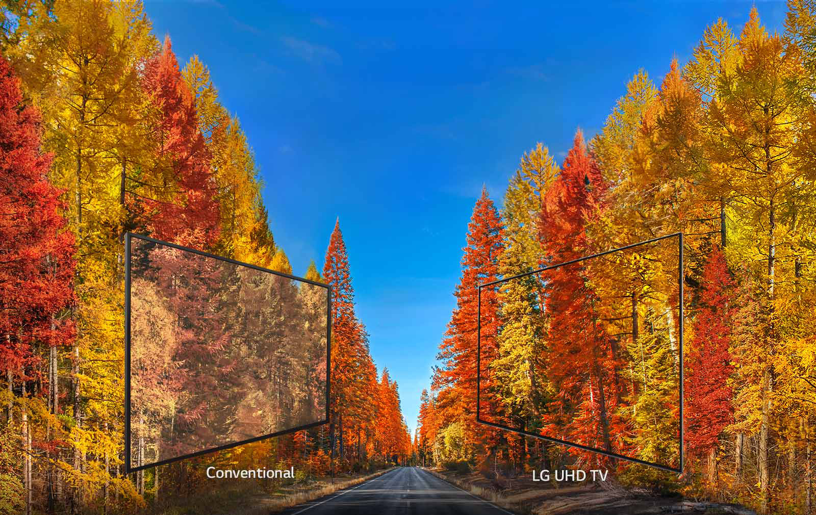 Two displays facing each other mirroring a background image of fall trees with a road running up the middle. The two displays are showing comparisons of conventional versus LG UHD TV picture quality