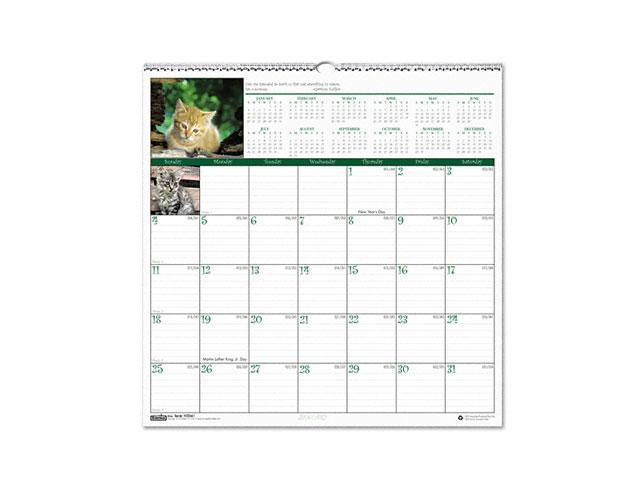 House of Doolittle 3661 Kittens Monthly Wall Calendar, 12 x 12