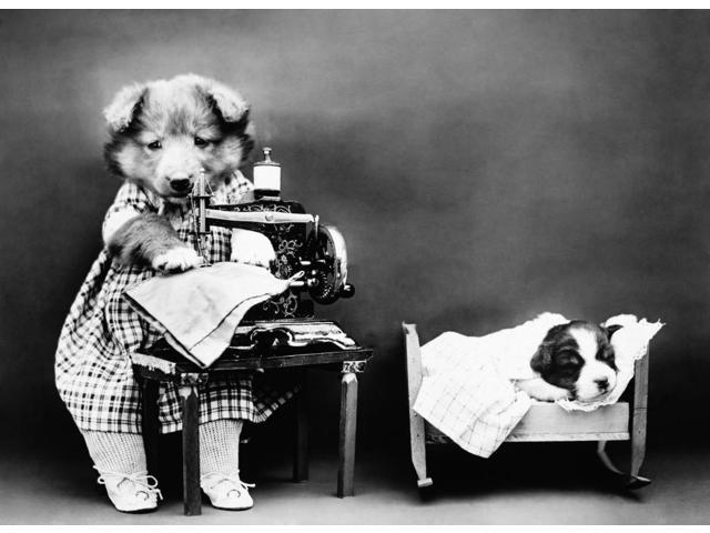 Frees Dog C1914 NMaking BabyS Clothes Photograph By Harry Whittier Frees C1914 Poster Print by  (18 x 24)