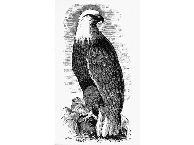 Eagle 19Th Century Namerican TypefounderS Cut Poster Print by  (18 x 24)
