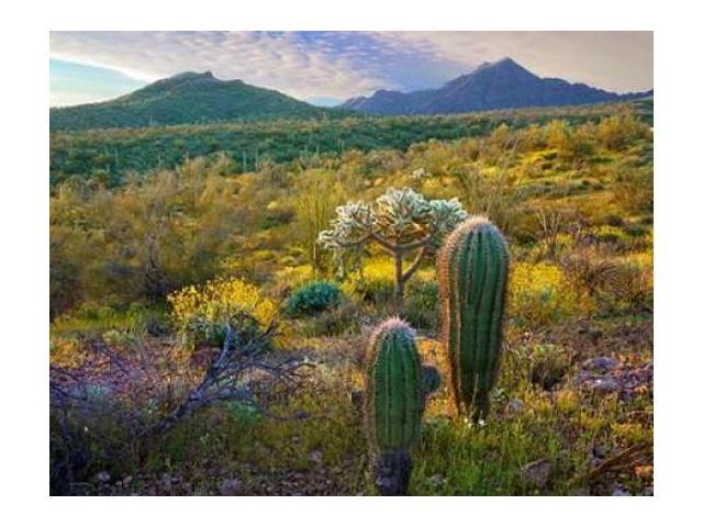 Fitzharris Tim Poster Print by Ajo Mountains-Organ Pipe Cactus National Monument-Sonoran Desert-Arizona (22 x 28)