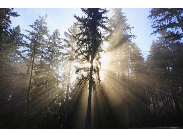 Sun Shining Through Morning Fog And Trees Happy Valley Oregon United States Of America Poster Print (19 x 12)