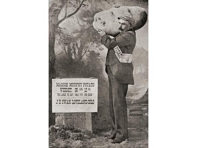 The biggest potato on record in 1879 The Maggie Murphy potato weighing 86lbs 10ozFrom The Strand Magazine published 1897 Poster Print (11 x 16)