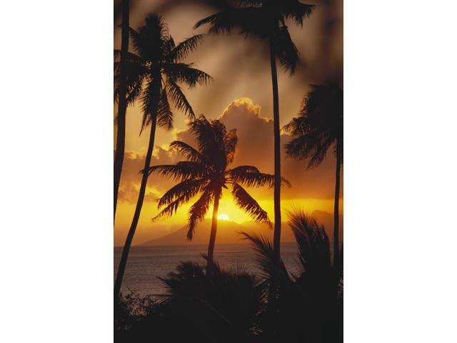 French Polynesia Tahiti Palm Trees Silhouetted By A Vibrant Sunset Poster Print (13 x 20)