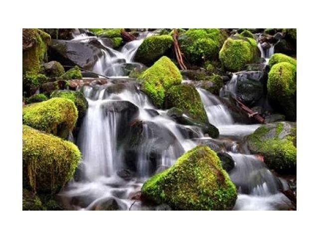 Trailside Stream Poster Print by Douglas Taylor (24 x 36)