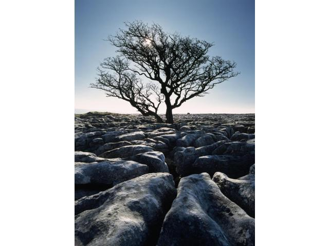 Limestone Pavement At Twisleton Scars Yorkshire Dales National ParkNorth YorkshireEnglandUk Poster Print (13 x 18)