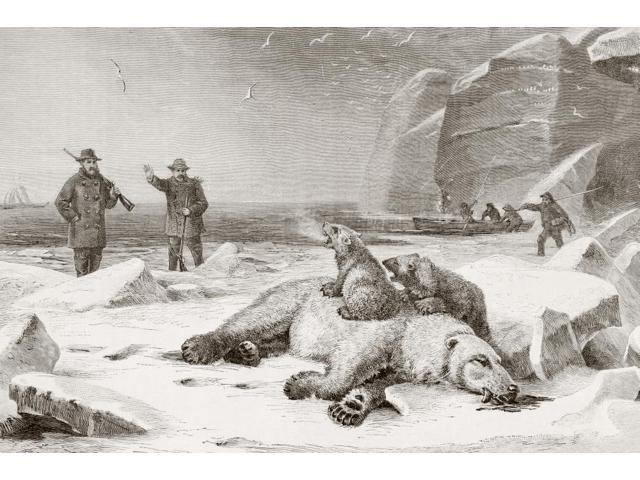 Hunting The Polar Bear (Ursus Maritimus) In The Arctic Circle During The Late 19Th Century Two Cubs Defend The Body Of Their Mother Which Has Been Shot From El Mundo Ilustrado Published Barcelona Circ