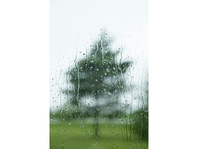 Raindrops On The Window With A Tree Outside Thunder Bay Ontario Canada Poster Print (13 x 19)