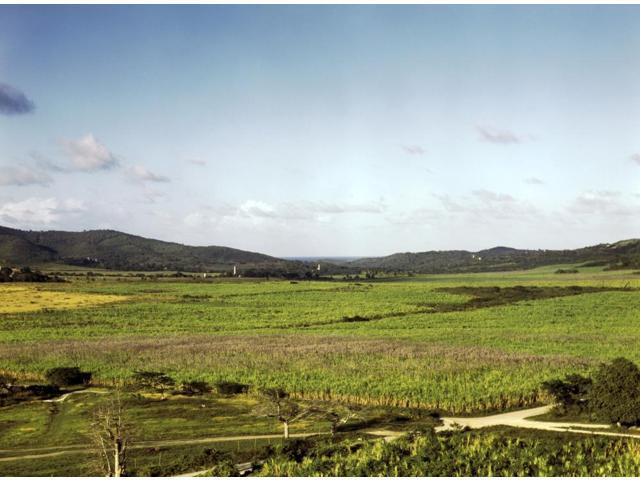 Puerto Rico Farm 1941 Nsugarcane Plantations In Yabucoa Valley Puerto Rico Photograph By Jack Delano December 1941 Poster Print by  (18 x 24)