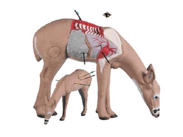Rinehart Targets 10711 Anatomy Deer Archery Shot Placement Training ...