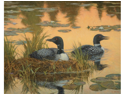 White Mountain Puzzles WHITE811 Nesting Loons