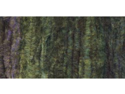 Chenille Yarn-Forest