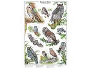Windsor Nature Posters Birds of Prey Owls A