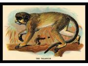 Buyenlarge 15165-xP2030 The Talapoin 20x30 poster