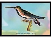 Buyenlarge 15255-9P2030 Hummingbird - Trochilus Gramineus - Young 20x30 poster