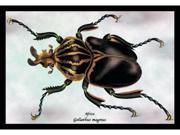 Buyenlarge 15379-2P2030 Beetle - African Goliathus Magnus NO.1 20x30 poster