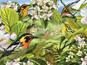 Outset Media Games OM52037 Blackburnian Warblers Puzzle, 500 pieces