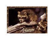 Bulk Buys Arkansas Postcard 12126 Raccoon - Case of 750