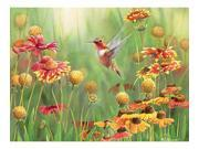 Outset Media Games OM52078 Rufous Hummingbird 500 piece Puzzle