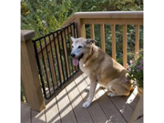 Cardinal Stairway Special Outdoor White Pet Gate - Stainless Steel Hardware
