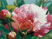 """FOV Editions Canvas Print Unframed 24"""" X 30"""" Wendy's Peonies By Thelma Parsons"""