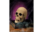 Human Skull Halloween Decoration Prop