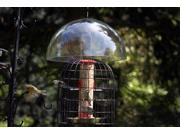 ChapelWood Squirrel Dome and Feeder Shelter