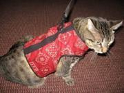 Kitty Holster Extra Small Red Bandana