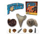 Starter Fossil Kit - Collect 10 Real Fossil Specimens!