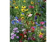 Wildflower Seed Mats pk 3