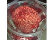 Halloween Scary Body Parts Brain in a Food Container Prop