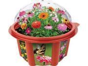 Heirloom Flower Garden DUNX0059 DuneCraft