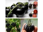 2014 New Hot Sale Rare Seeds Tomato Black Cherry Russian Heirloom Vegetable Seed