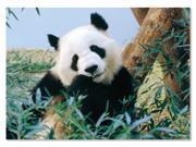 Giant Panda 30 pcs. - Jigsaw Puzzle by Melissa & Doug (8925)