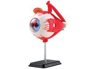 Elenco EDUSK007 3D DIY Eyeball Anatomy with CD