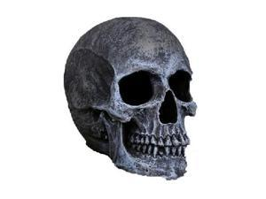 Costumes For All Occasions FW91113GT Large Realistic Skull - Grey