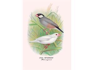 Buyenlarge 05228-7P2030 Java Sparrow 20x30 poster
