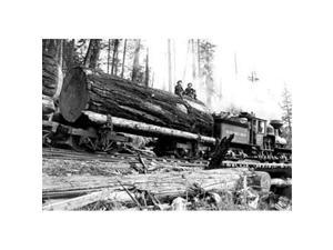 Transporting Fallen Old Growth 28x42 Giclee On Canvas