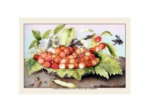 A Dish of Cherries With a Bean and a Hornet 12x18 Giclee On Canvas