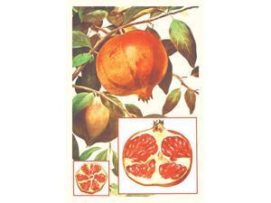 Buy Enlarge 0-587-08632-7C12X18 Pomegranate- Canvas Size C12X18