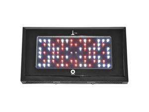 LIGHTHOUSE HYDRO 240W Blackstar HO LED Grow Light 3w LED's