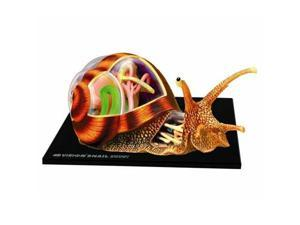 4D Snail Anatomy Model