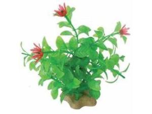 Natural Elements Blooming Ludwigia Green Red 5-6 Inch
