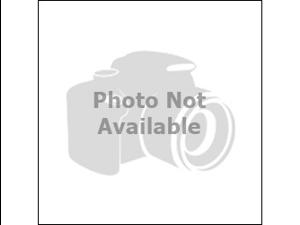 Dewalt D51257 Finish Nailer Replacement O-Ring Kit # N001065