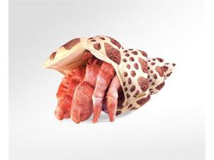 """Folkmanis Puppet Crab, Hermit 13"""""""