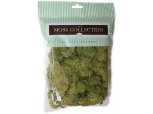 Preserved Reindeer Moss 108.5 Cubic Inches-Spring Green